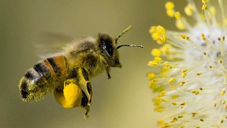 Deutsche Regierung nutzt Abriegelung, um tödliches Pestizid wieder einzuführen