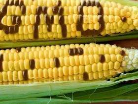 GMO34233