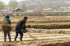 Ждет ли Северную Корею новый голод?