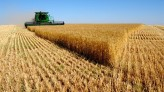 Victory! World's Largest Nation Bans GMO Food Crops