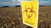 GMO Chickens Coming Home to Roost