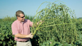 Will Superweeds Choke GMO to a Timely Death in USA?